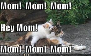 Mom!  Mom!  Mom! Hey Mom! Mom!  Mom!  Mom!