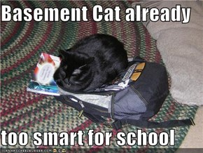 Basement Cat already  too smart for school