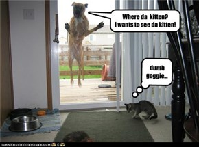 Where da  kitten?              I wants to see da kitten!