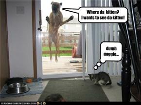 Where da  kitten?              I wants to see da kitten!