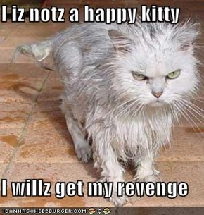 I iz notz a happy kitty  I willz get my revenge