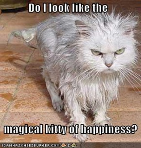 Do I look like the     magical kitty of happiness?