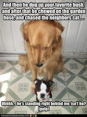 And then he dug up your favorite bush, and after that he chewed on the garden hose, and chased the neighbors cat.....