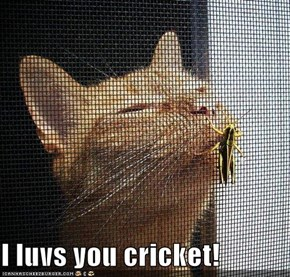 I luvs you cricket!