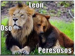Leon Oso Peresosos