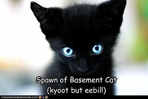 Spawn of Basement Cat (kyoot but eebil!)