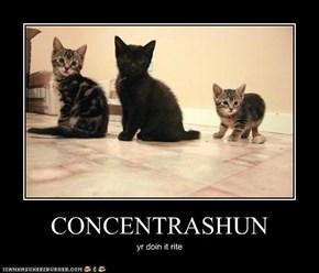 CONCENTRASHUN