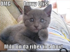 OMG            hurry Otis!  Milo on da riber in a box!