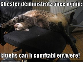 Chester demunstratz once again:  kittehs can b cumftabl enywere!