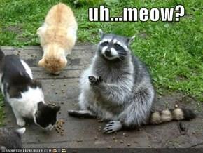 uh...meow?
