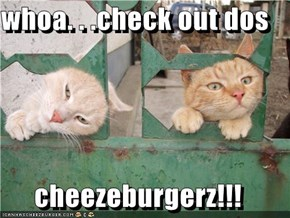 whoa. . .check out dos  cheezeburgerz!!!