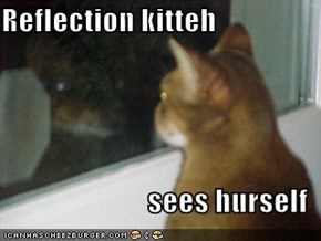 Reflection kitteh  sees hurself