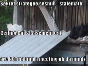 Sekret strategee seshun - stalemate Ceiling Cat & Basement Cat are NOT habing a meeting ob da mindz
