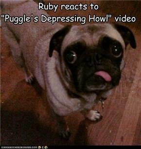 Empathy Pug