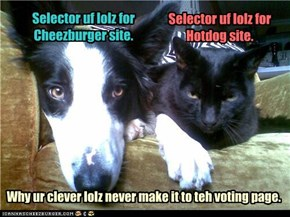 Why ur clever lolz never make it to teh voting page.