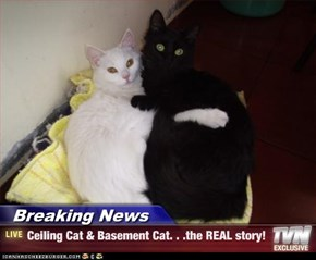 Breaking News - Ceiling Cat & Basement Cat. . .the REAL story!