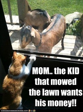 MOM.. the KID that mowed the lawn wants his money!!