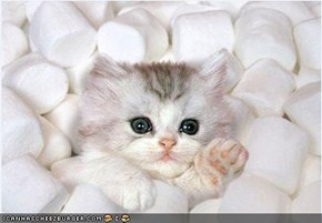Cyoot Kitteh of teh Day: HALP!  Iz Bein Eaten Bai Dis Giant Hot Chokolate!