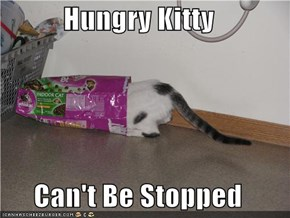 Hungry Kitty  Can't Be Stopped