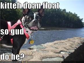 kitteh doan float so gud do he?