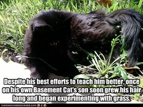 Despite his best efforts to teach him better, once on his own Basement Cat's son soon grew his hair long and began experimenting with grass.