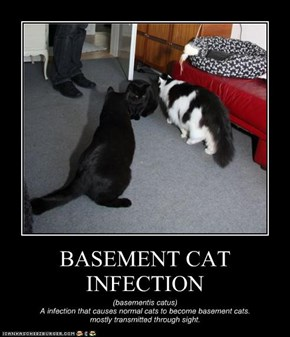 BASEMENT CAT INFECTION