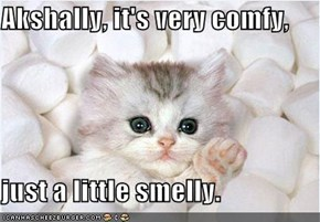 Akshally, it's very comfy,  just a little smelly.