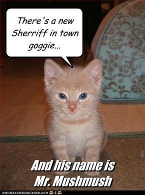There's a new Sherriff in town goggie...