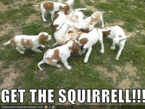 GET THE SQUIRRELL!!!!