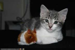 Cyoot Kitteh of teh Day: Dis Mah Hamster Frend.  He Dunt Say Much.