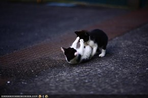 Cyoot Kittehs of teh Day: Wrasslin in teh Streets