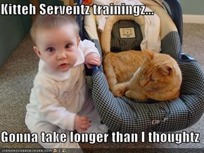 Kitteh Serventz trainingz...  Gonna take longer than I thoughtz