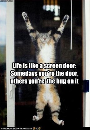 Life is like a screen door:  Somedays you're the door, others you're  the bug on it