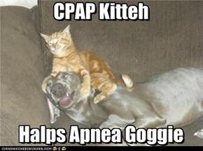 CPAP Kitteh      Halps Apnea Goggie