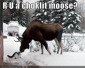 R U a choklit moose?