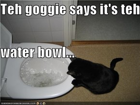 Teh goggie says it's teh  water bowl...