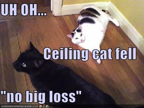 "UH OH... Ceiling cat fell ""no big loss"""