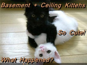 Basement + Ceiling Kittehs So Cute! What Happened?