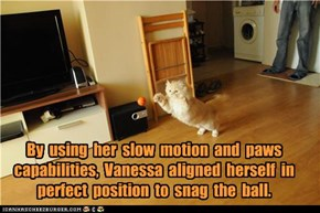 By  using  her  slow  motion  and  paws  capabilities,  Vanessa  aligned  herself  in  perfect  position  to  snag  the  ball.