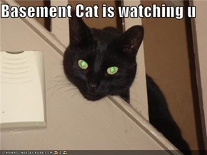 Basement Cat is watching u