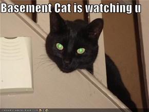 Basement Cat is watching u
