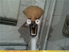 Beaker mop is afraid
