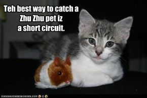 Teh best way to catch a  Zhu Zhu pet iz  a short circuit.