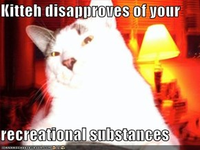 Kitteh disapproves of your  recreational substances