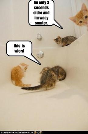 stupid kittys