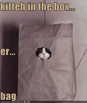 kitteh in the box... er... bag