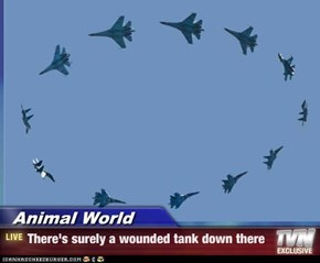 Animal World - There's surely a wounded tank down there