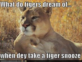 What do tigers dream of...  when dey take a tiger snooze