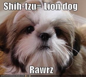 Shih-tzu= Lion dog  Rawrz