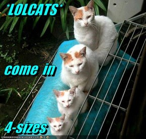 *LOLCATS*  come  in  4-sizes
